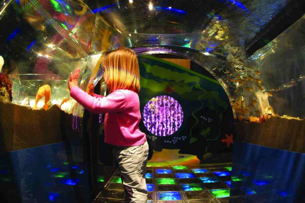 A child enjoys the fishes in the new Aquaquest learning centre.