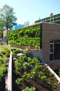 """A vegetation-screened exterior wall signifies the building's """"green"""" character."""