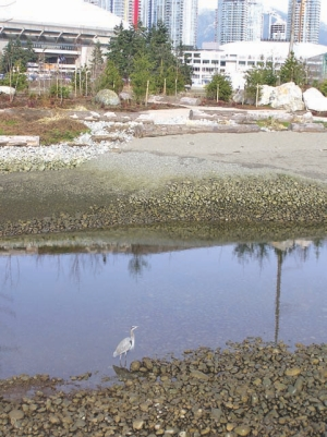 NEU design -Sandwell (Ray Tarnai, P. Eng.); FVB Energy (Peter Beckett, P. Eng., Bard Skagestad P. Eng., John Chin P. Eng.); project management: City of Vancouver. Foreshore -Hayco/EBA (Ralph Everts, P. Eng., Tara Hirsekorn, P. Eng.)