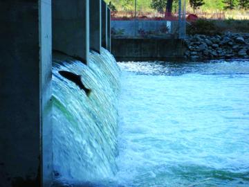 Salmon jump the overshot gates at the McIntyre Dam, B.C.