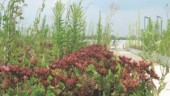 Plants flourish in August on the Ajax Fire Hall roof. A layer of cups below the vegetation is fed by a rainwater cistern. Top right: firehall entrance.