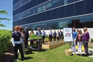 Hatch employees engage the local community during its annual Sustainability Week. Photo: Hatch