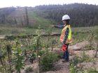Bioengineering for Fort McMurray