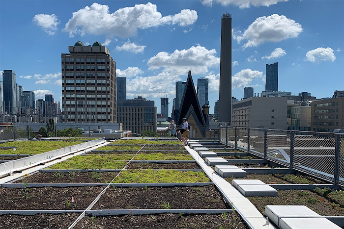 U of T GRIT Lab green roof